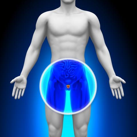 Простата находится прямо под мочевым пузырем и окружает часть мочеиспускательного канала.