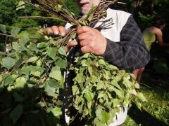 Идеальный материал для березовых веников — гибкие и плотные стебли с нежными и шелковистыми листьями.
