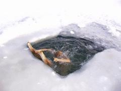 Традиция охлаждаться после парной в ледяной воде также свойственна и скандинавским народам.